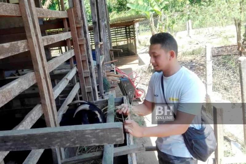 pengusaha kambing mudah