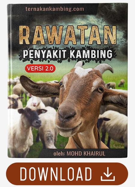 cara rawat penyakit kambing 4